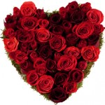Saint Valentin Combien de roses faut-il offrir ?